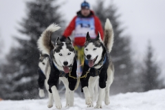 Czech Republic Dog Sled Race