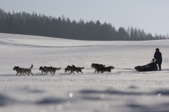 sedivackuv-long-sled-dog-race-101