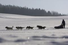sedivackuv-long-sled-dog-race-101