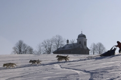 sedivackuv-long-sled-dog-race-111