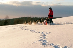 sedivackuv-long-sled-dog-race-141