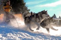 sedivackuv-long-sled-dog-race-151