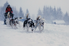 sedivackuv-long-sled-dog-race-161