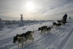 sedivackuv-long-sled-dog-race-17