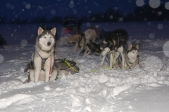 sedivackuv-long-sled-dog-race-18