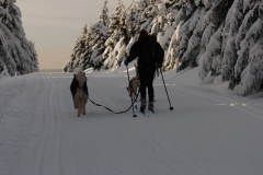 sedivackuv-long-sled-dog-race-20