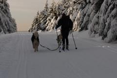 sedivackuv-long-sled-dog-race-20