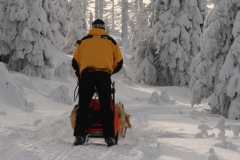 sedivackuv-long-sled-dog-race-221
