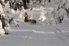 sedivackuv-long-sled-dog-race-23