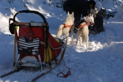 sedivackuv-long-sled-dog-race-24