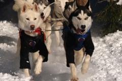 sedivackuv-long-sled-dog-race-25