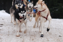 sedivackuv-long-sled-dog-race-26