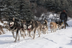 sedivackuv-long-sled-dog-race-28