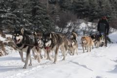 sedivackuv-long-sled-dog-race-28
