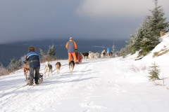 sedivackuv-long-sled-dog-race-29