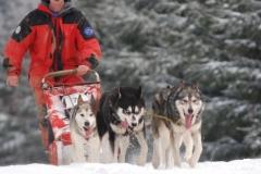 sedivackuv-long-sled-dog-race-311