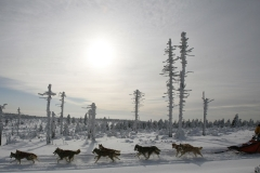 sedivackuv-long-sled-dog-race-32