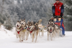 sedivackuv-long-sled-dog-race-321
