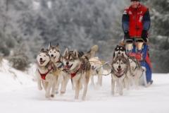 sedivackuv-long-sled-dog-race-321