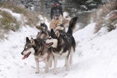 sedivackuv-long-sled-dog-race-33