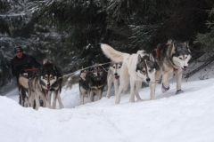 sedivackuv-long-sled-dog-race-34