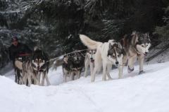 sedivackuv-long-sled-dog-race-34