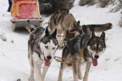 sedivackuv-long-sled-dog-race-36