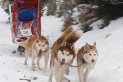 sedivackuv-long-sled-dog-race-37