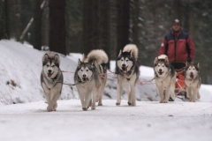 sedivackuv-long-sled-dog-race-39
