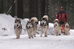 sedivackuv-long-sled-dog-race-39