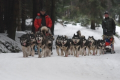 sedivackuv-long-sled-dog-race-40