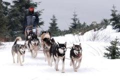 sedivackuv-long-sled-dog-race-411