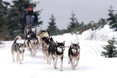 sedivackuv-long-sled-dog-race-411