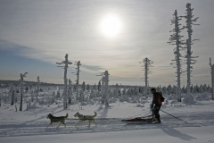 sedivackuv-long-sled-dog-race-42