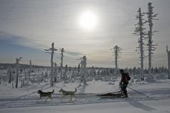 sedivackuv-long-sled-dog-race-42