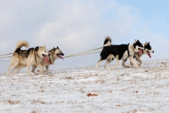 sedivackuv-long-sled-dog-race-421