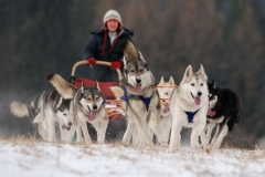 sedivackuv-long-sled-dog-race-44