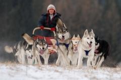 sedivackuv-long-sled-dog-race-44