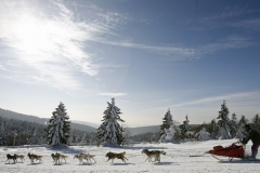 sedivackuv-long-sled-dog-race-52