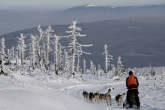 sedivackuv-long-sled-dog-race-61
