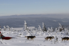 sedivackuv-long-sled-dog-race-71