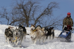 sedivackuv-long-sled-dog-race-91
